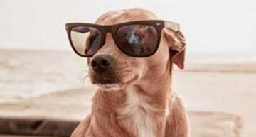 Whinny incanta con occhiali